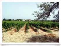 Tenuta Dioscuri - Produzione Vino - Cantine, a Bianco