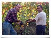 Azienda Agricola Canato Marco - Produzione Vino - Cantine, a Vignale Monferrato (Piemonte)