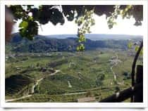 Cantine Luvit - Produzione Vino - Cantine, a <span class=&#39;notranslate&#39;>Borso del Grappa</span> (Veneto)