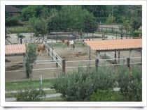 Amazon Ranch - Maneggio - Passeggiate a Cavallo a Roncaglia / Casale Monferrato (Piemonte)