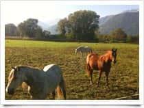 Azienda Agricola La Quercia - Maneggio, Pensione e Commercio Cavalli a Erbiola / Colico (Italia)
