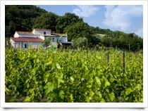 Tenuta Carbognano - Farm Holidays and Wine Production - Gemmano - (RN) - Emilia Romagna