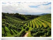 Tanorè Azienda Agricola - Produzione e Vendita Vini - Cantina San Pietro di Barbozza  / Valdobbiadene (Friuli-Venezia Giulia)