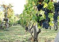 Casa Ronsil - Produzione vini - Cantina, a Chiomonte (Piemonte)
