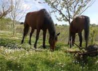 Centro Ippico Pegaso - Maneggio, passeggiate a cavallo, a <span class=&#39;notranslate&#39;>Apiro</span> (Marche)