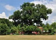 Agriturismo Parco Verde - Camere e ristorante in agriturismo - Area attrezzata per sosta camper a Grumento Nova (Basilicata)