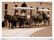 Passeggiate in carrozza nel Parco del Ticino - Besate (Italia)
