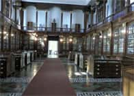 Centro Musei delle Scienze Naturali e Fisiche - , a Napoli (Campania)