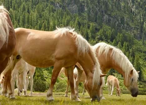 Photo The Soul of The Horses