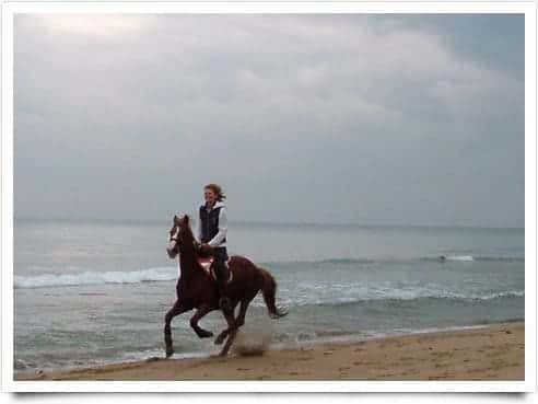 Photo Sea Horse Club