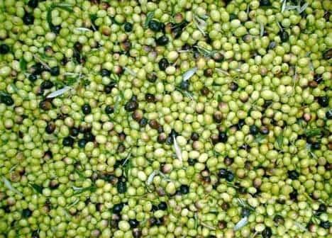 Photo di Sagra delle olive