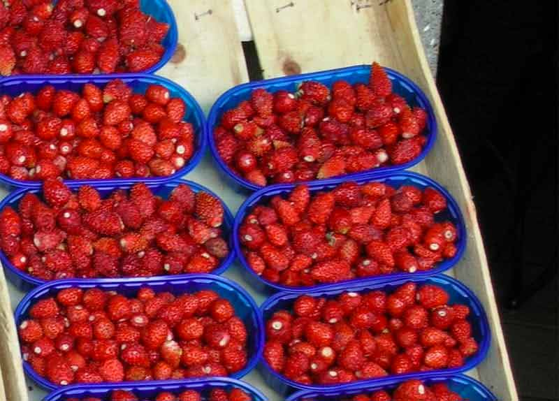 Photo di Sagra delle fragole di Nemi