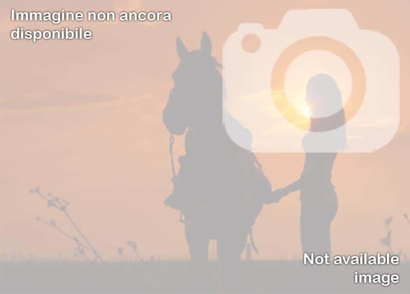 Circolo Ippico Aragona Arabian's - Barano d'Ischia