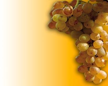 Vini Italiani di Qualità o V.Q.P.R.D. in Italia